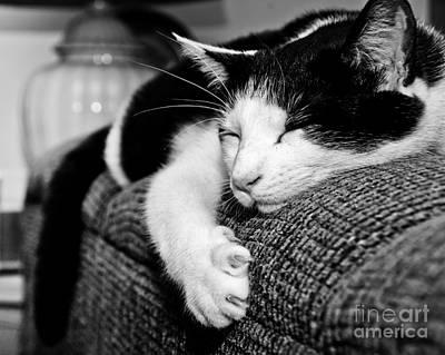 Photograph - Purr Purr Purr by Cheryl Baxter