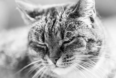 Abstract Male Faces - Purring Cat by Hakon Soreide