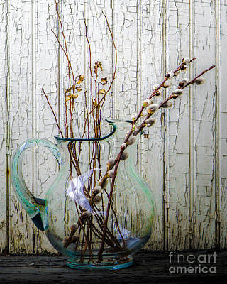 Photograph - Pussy Willow In Pitcher by Michael Arend