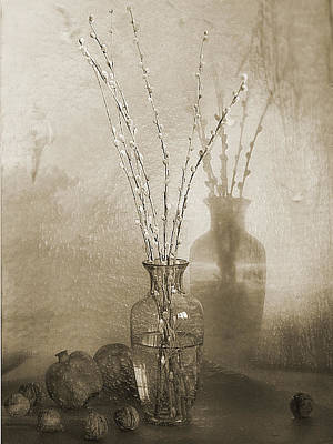 Pussy Willow In Sepia Art Print by Frida Kaas