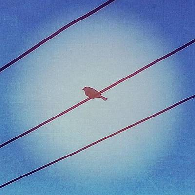 Red Wall Art - Photograph - Put A Bird On It by Jill Tuinier