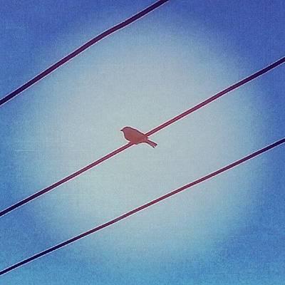 Put A Bird On It Art Print