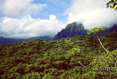 Puu Piei Trail Koolau Mountains Art Print by Thomas R Fletcher
