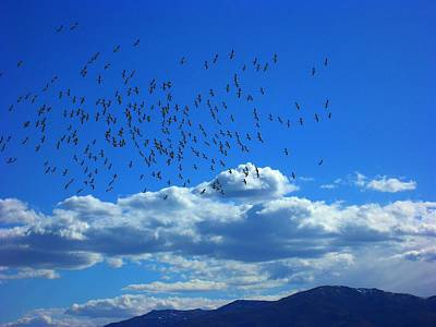 Photograph - Pyramid Lake Birds by Kristen R Kennedy