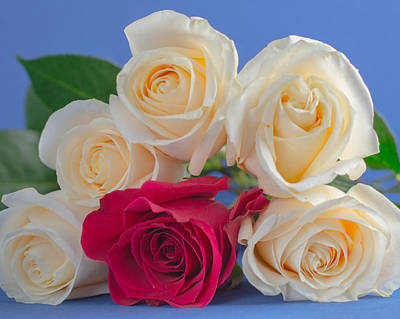 Flower Photograph - Pyramid Of Roses by Diane Bell