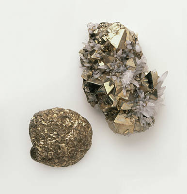 Pyrite Photograph - Pyrite Interspersed With Quartz by Dorling Kindersley/uig