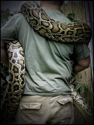 Snake Photograph - Python Boa by LeeAnn McLaneGoetz McLaneGoetzStudioLLCcom