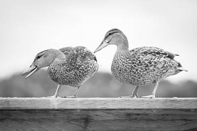 Wood Duck Profile Photograph - Quack Quack by Windy Corduroy