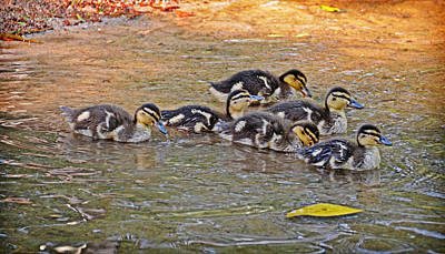 Photograph - Quackers by Linda Brown