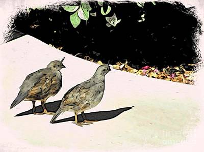 Photograph - Quail Brothers Return by Phyllis Kaltenbach