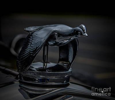 Photograph - Quail Hood Ornament by Ronald Grogan
