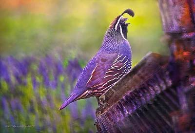 Quail In Lavender Art Print by Kari Nanstad