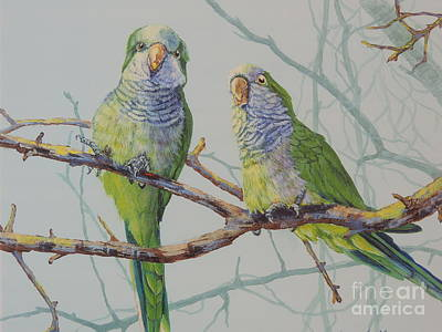 Quaker Parrot Painting - Quaker Chat by Sandra Williams