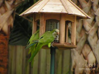 Quaker Parrot Photograph - Quaker Parrots II by Sandra Williams