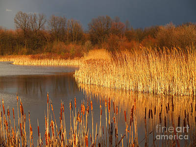 Golden Marsh Photograph - Quakertown Marsh Before Spring Storm by Anna Lisa Yoder