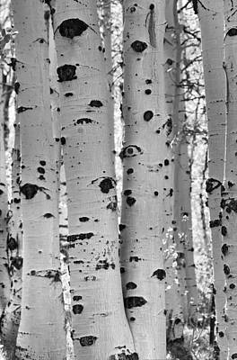 Quaking Aspen Zion National Park Art Print