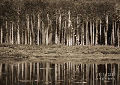 Quaking Aspens Reflected In Willow Lake Original by David Crane