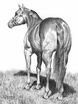 Drawing - Quarter Horse Assets by Suzanne Schaefer