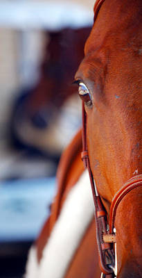 Photograph - Quarter Horse Eye by Jerry Sodorff