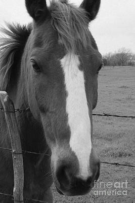 Photograph - Quarter Horse by Jerry Bunger