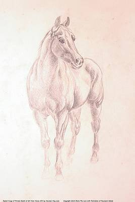 Maureen Drawing - Quarter Horse Mare Cocoa Silk - Front View by Maureen Love