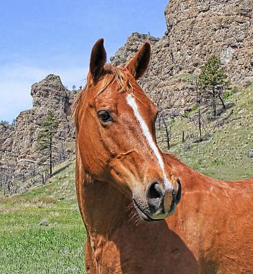 Photograph - Quarter Horse Portrait Montana by Jennie Marie Schell