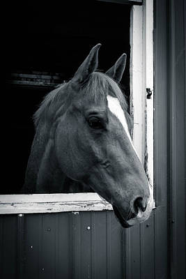 Photograph - Quarterhorse  7p01029 by Guy Whiteley
