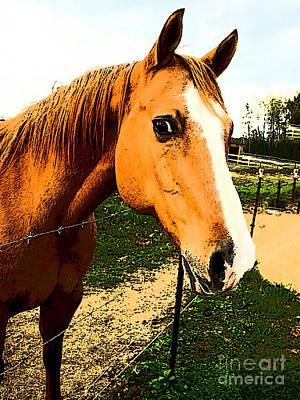 Photograph - Horse Art - Quarterhorse Stare Down by Lesa Fine