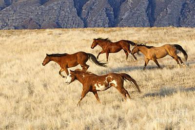 Photograph - Quarterhorses Running by M Watson