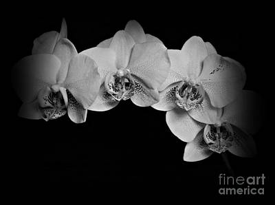 Photograph - Quatro Bw by Chalet Roome-Rigdon