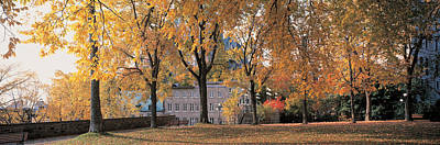 Fallen Leaf Photograph - Quebec City Quebec Canada by Panoramic Images