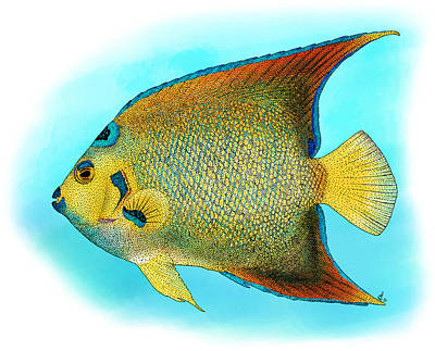 Photograph - Queen Angelfish by Roger Hall