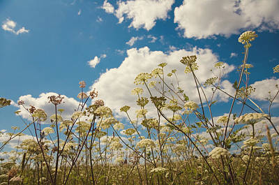 Queen Anne Lace And Sky Print by Jenny Rainbow