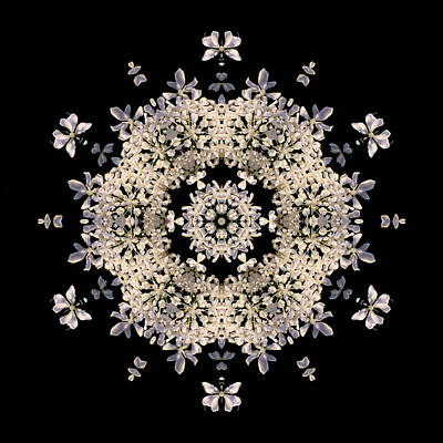 Queen Anne's Lace Flower Mandala Art Print by David J Bookbinder