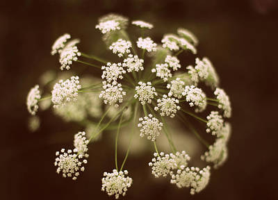 Laces Digital Art - Queen Anne's Lace by Jessica Jenney