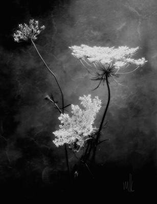 Photograph - Queen Anne's Lace by Louise Kumpf
