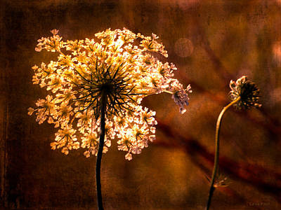 Photograph - Queen Annes Lace Vintage by Lesa Fine