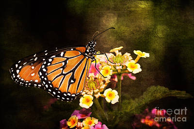 Photograph - Queen Butterfly by Marianne Jensen