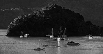 Queen Charlotte Sound Art Print by Nigel Forster