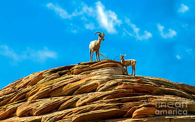 Photograph - Queen Ewe by Robert Bales