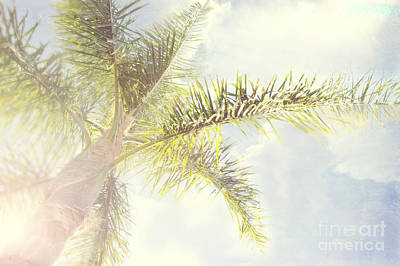 Queen Palm Art Print