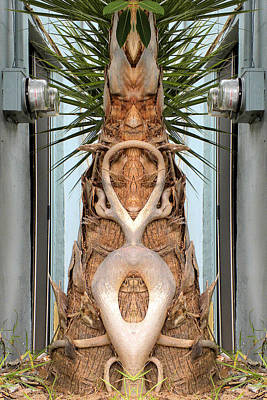 Photograph - Queen Palm by Richard Barone