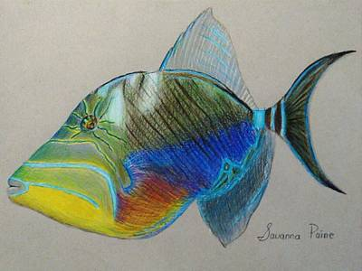 Triggerfish Drawing - Queen Triggerfish by Savanna Paine