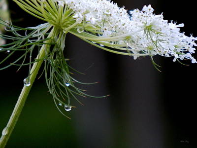 Photograph - Queenly Drops by Wild Thing