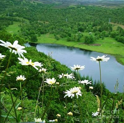 Photograph - White Daisies At Queen's View 2 by Joan-Violet Stretch