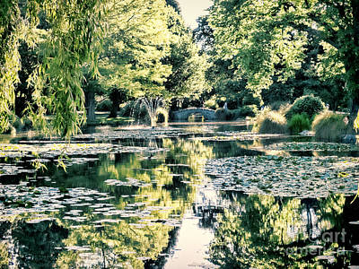 Photograph - Queenstown Gardens  by Karen Lewis