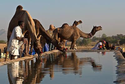 Quenching Thirst Original by Mukesh Srivastava
