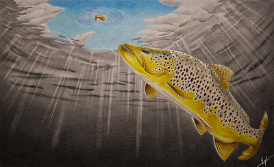 Brown Trout Drawing - Quiet Anticipation by Nick Laferriere