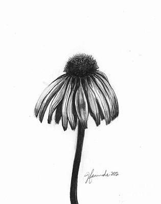 Daisy Drawing - Quiet Comfort by J Ferwerda