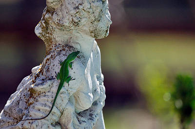 Brown Anole Photograph - Quiet Conversation by Roy Williams